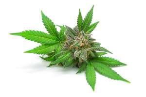 Buying and Using Recreational Marijuana